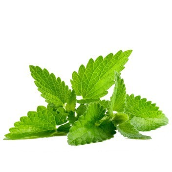 Peppermint DIY Flavor Concentrate